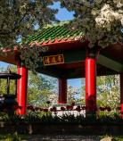 Asian Cultural communities | Beechwood