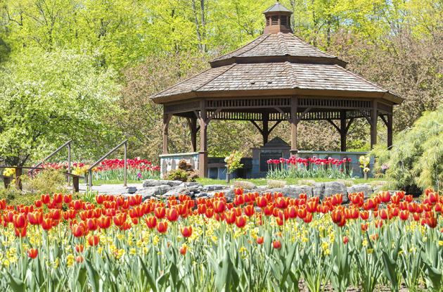 Gazebo surrounded by flowers